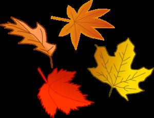 Kenmore Water Activities Fall Leaves